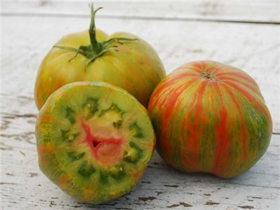 tomato-berkeley-tie-dye-green-ts155-web-51