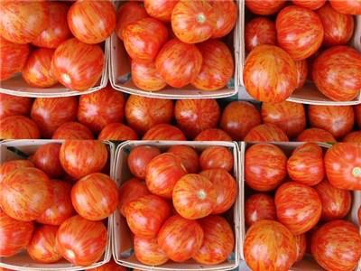 tomato-red-zebra-ts107-web-2