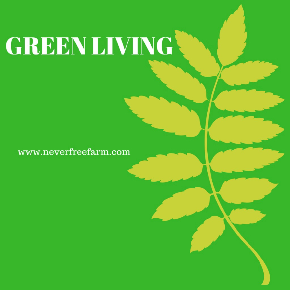 green living what is it Green living- time to go green: summary green living is the changing of your life style to set it according to the ways of the planet by that, i mean that we need .