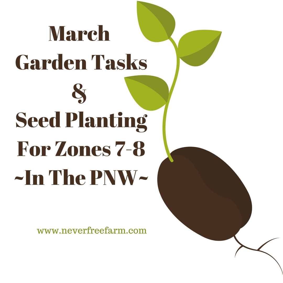 March Garden Tasks And Seed Planting For Zones 7 8 Pnw